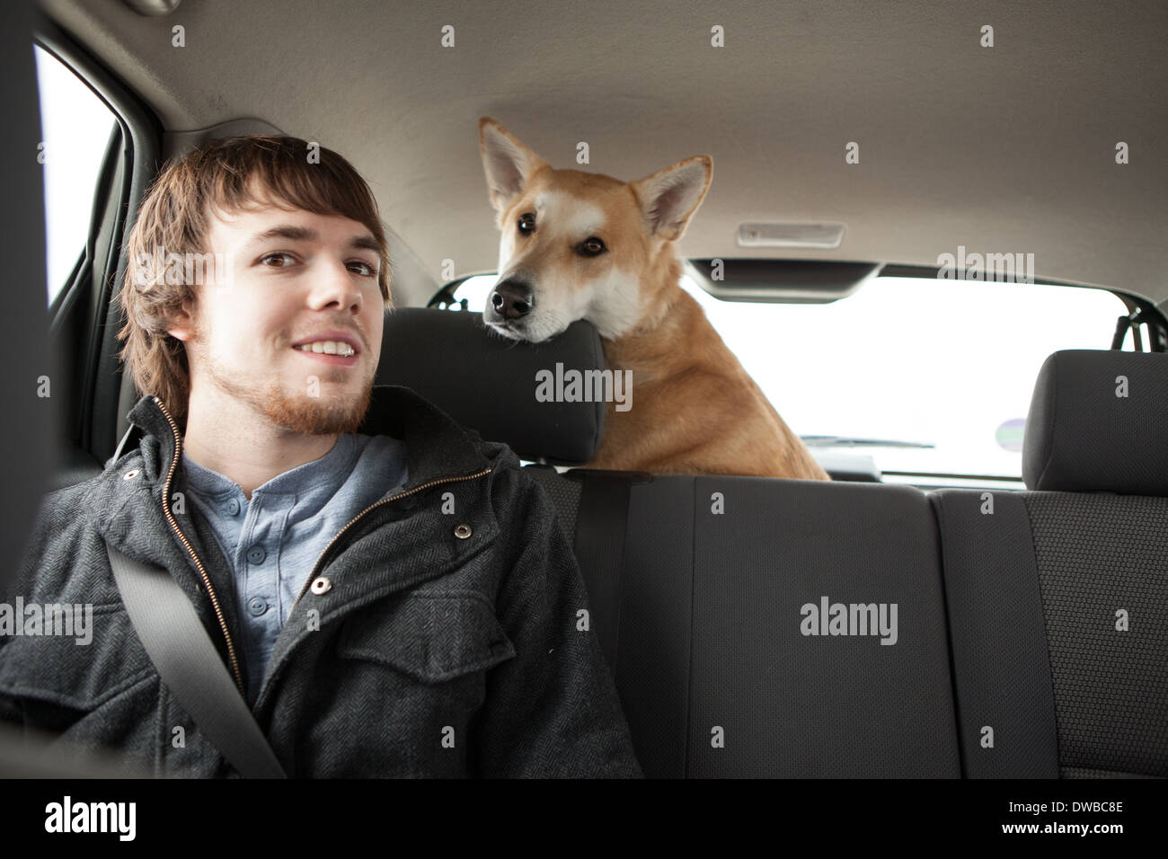 Young man and his cross bred alsatian dog in car back seat - Stock Image