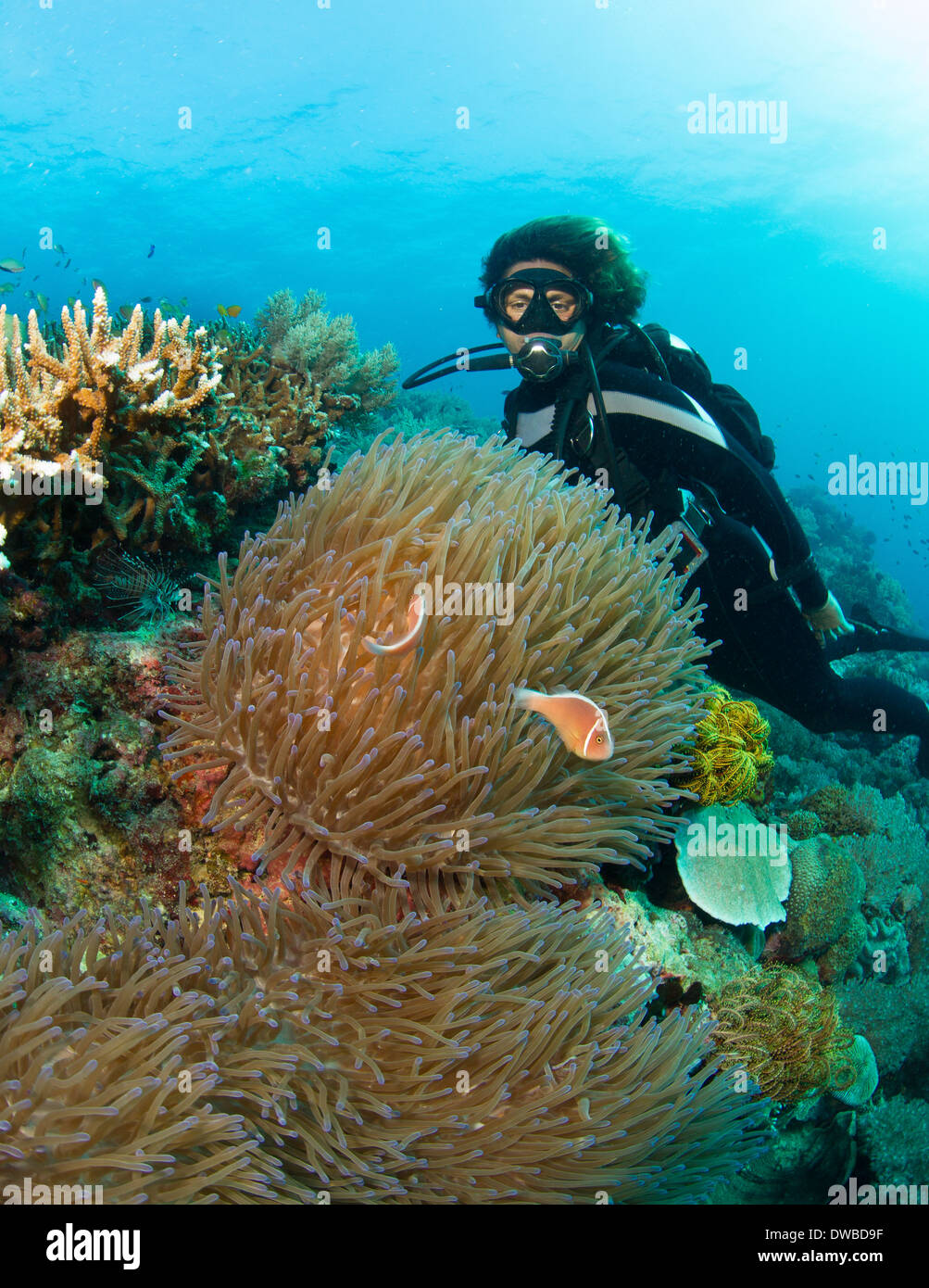 Diver and anemone. - Stock Image