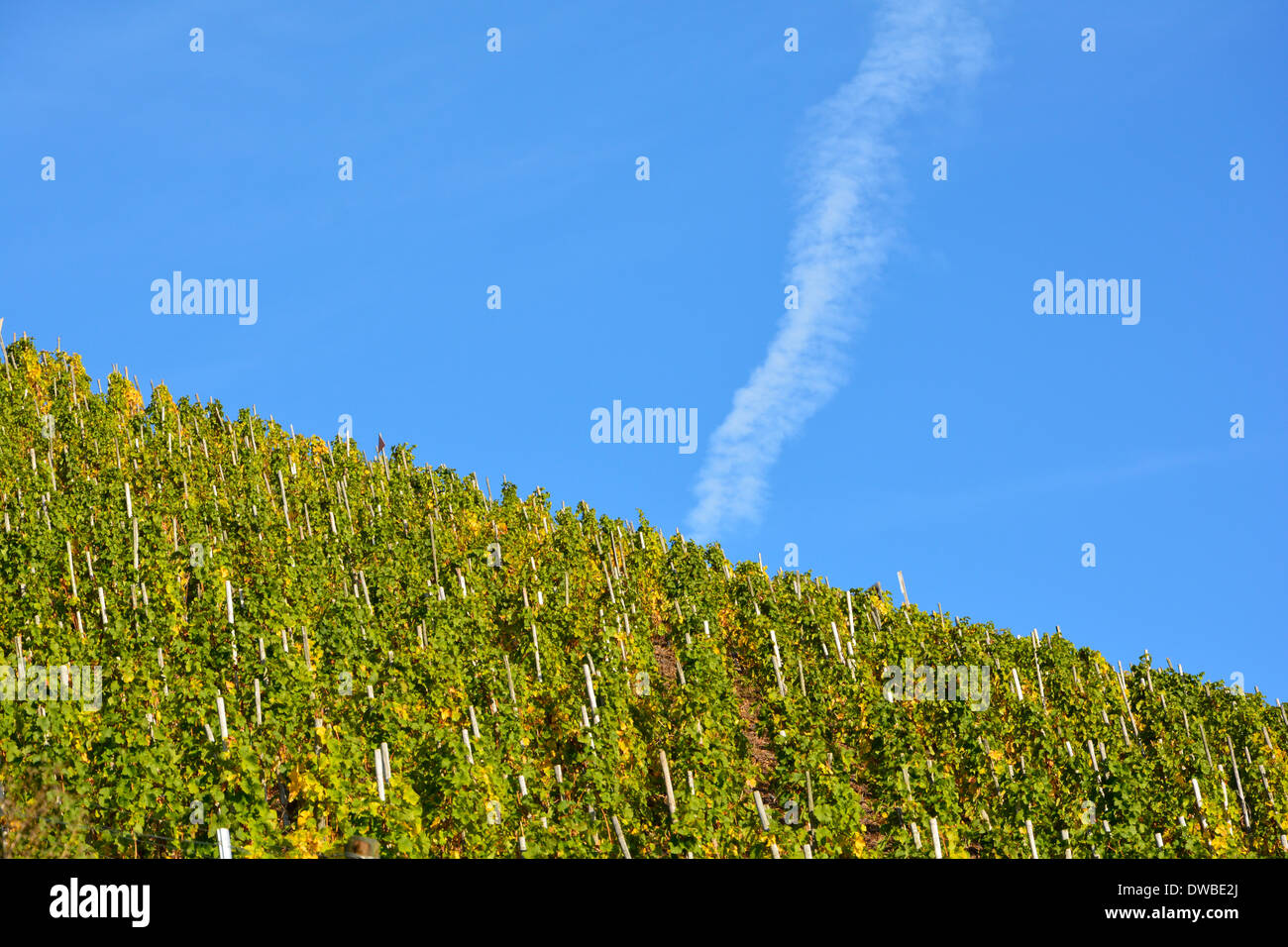 vineyard with blue sky and vapour trail Moselle Weinberg an der Mosel mit blauem Himmel und Kondensstreifen Stock Photo