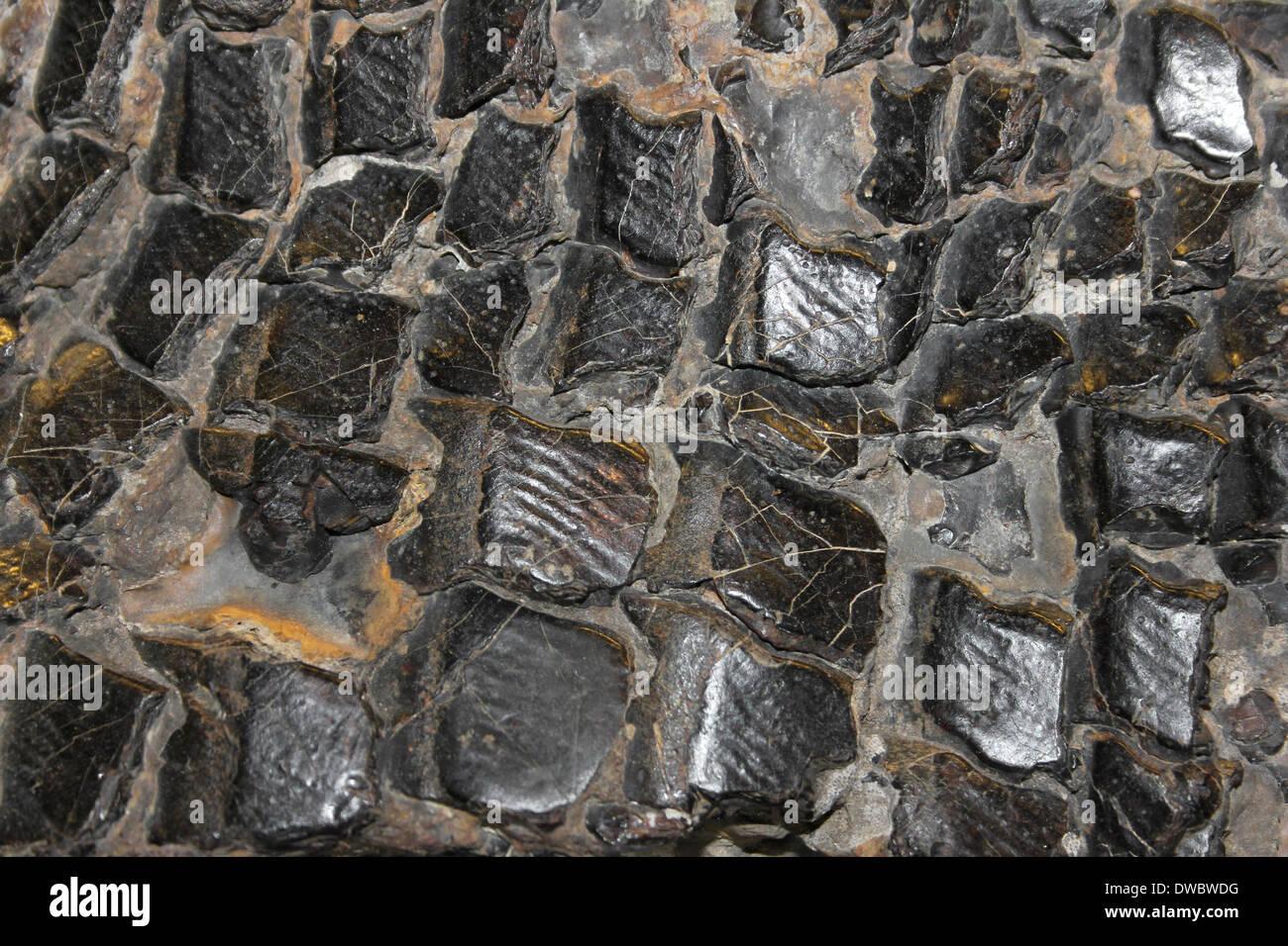 Lepidotus Fish Scales, Cretaceous - Stock Image
