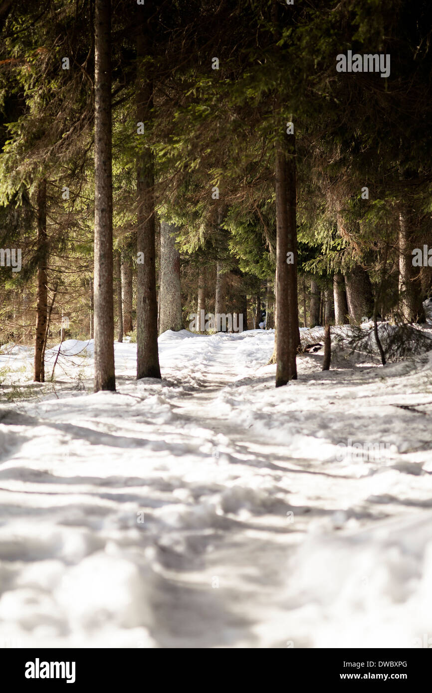 Germany, Bavaria, Snow-capped path at Grosser Arber - Stock Image