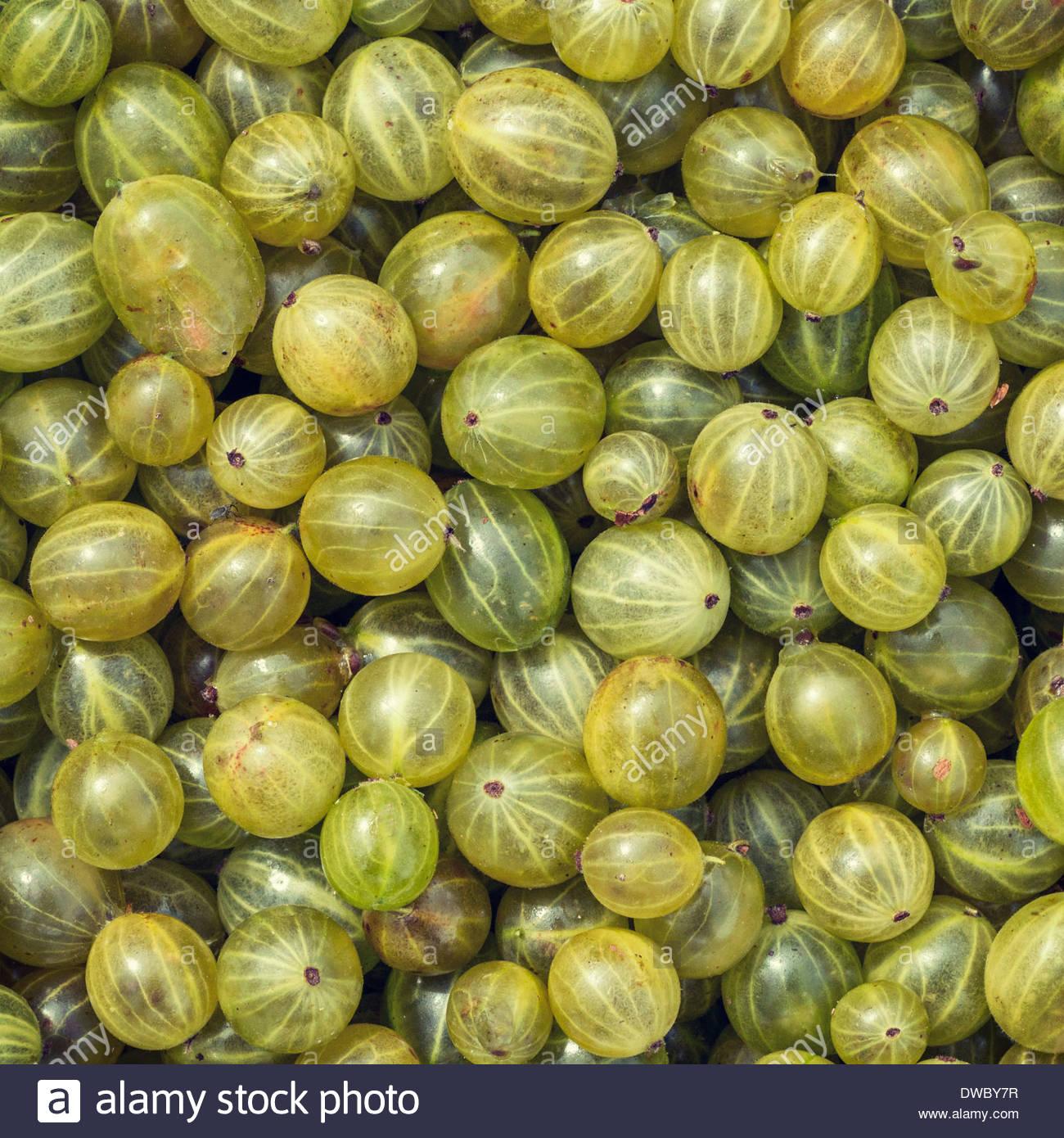Full frame shot of green gooseberries - Stock Image