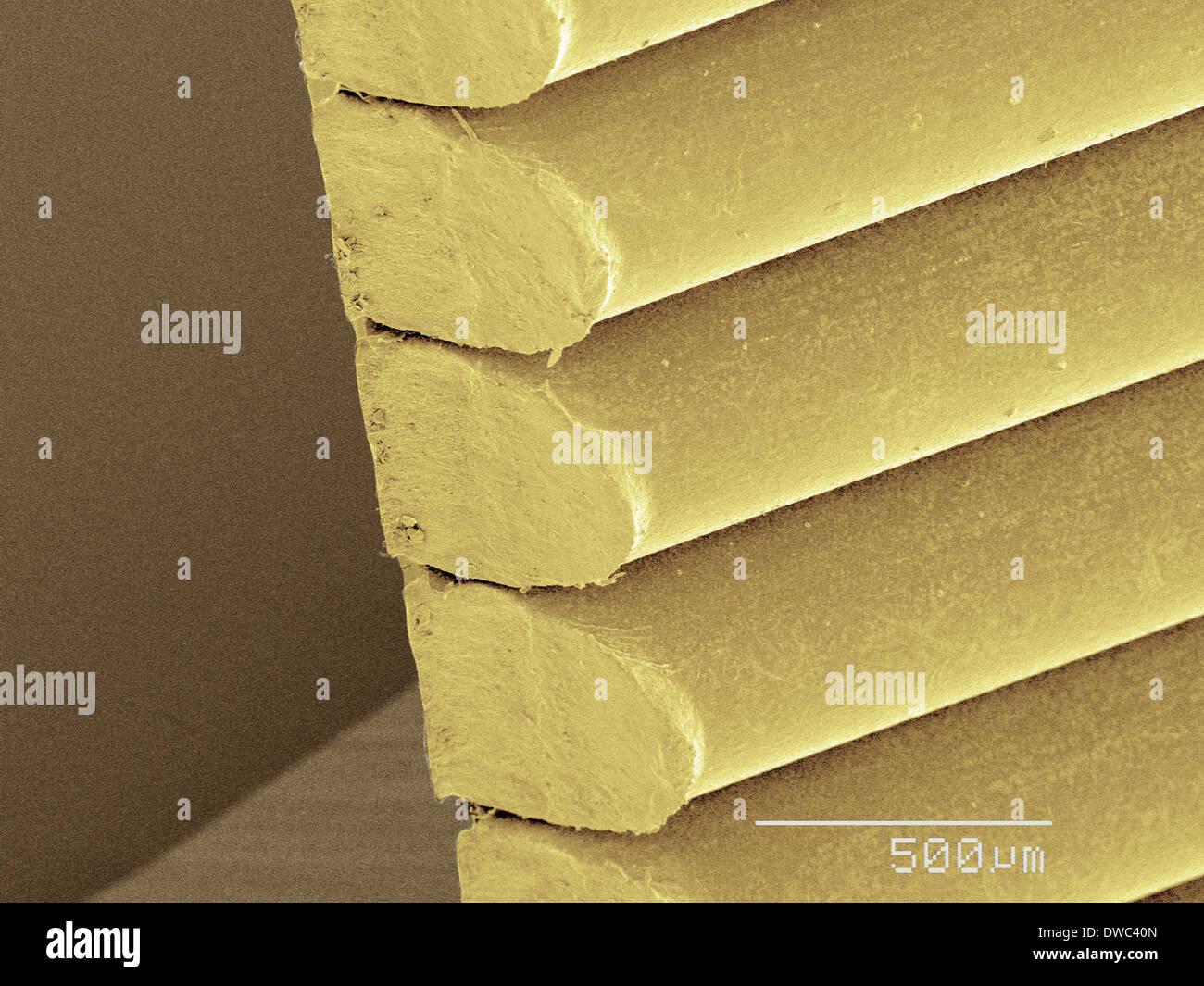 Coloured SEM of staples - Stock Image