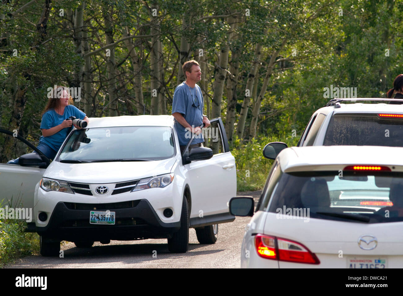 Automobile traffic jam of tourists looking at wildlife in Waterton Lakes National Park, Alberta, Canada. - Stock Image