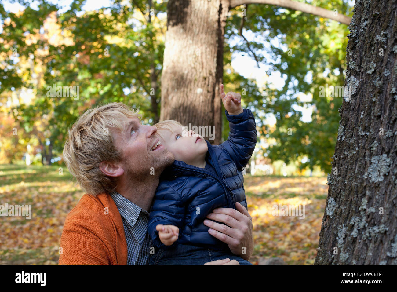 Father and son playing at bottom of tree - Stock Image