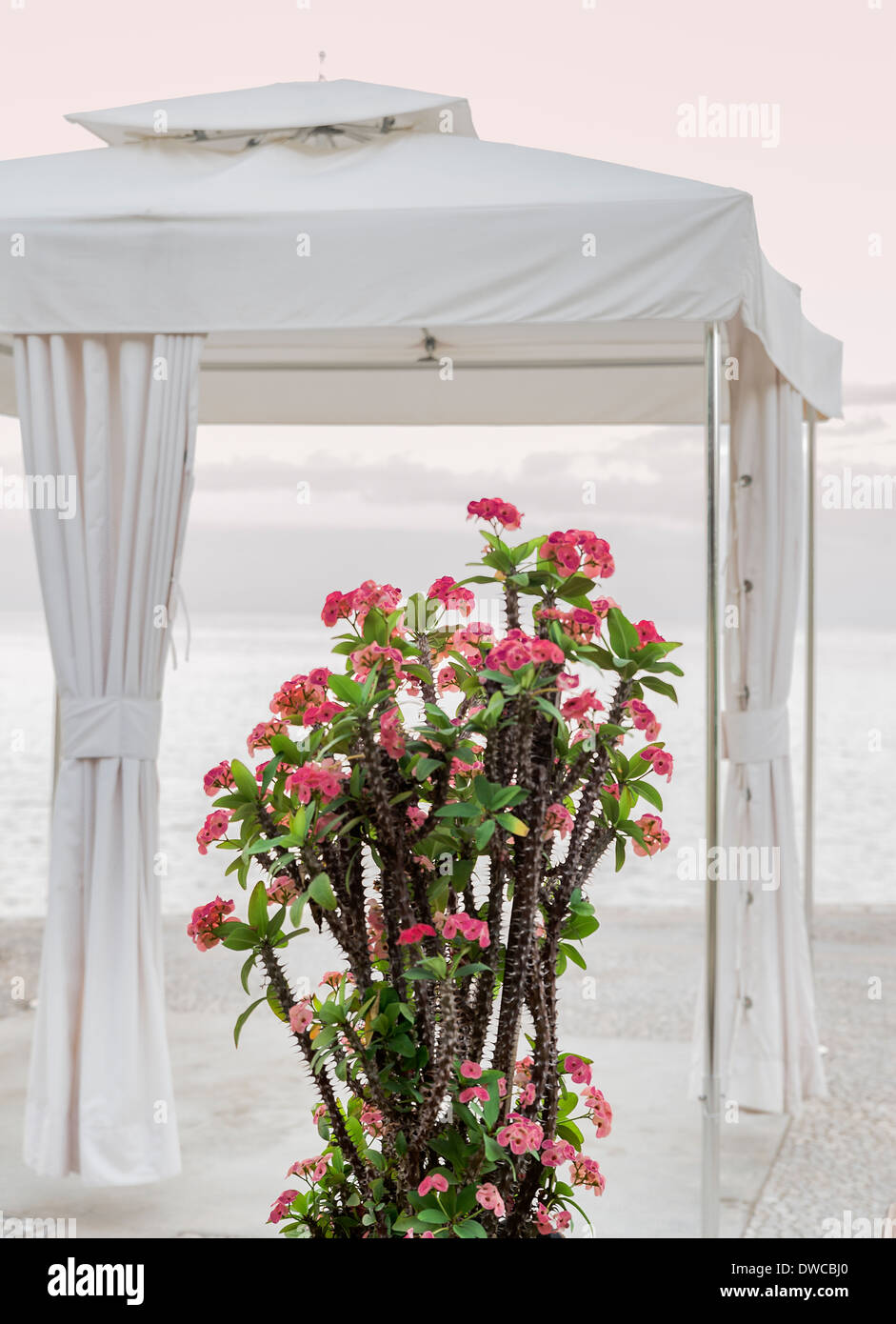 Spa tent with tropical flower overlooking the ocean. - Stock Image