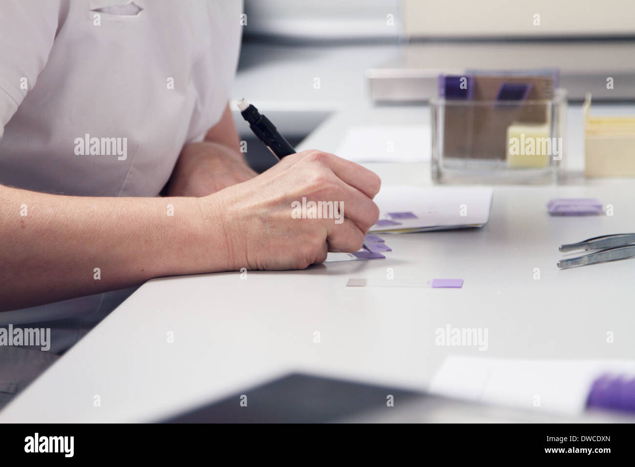 Female scientist labelling samples - Stock Image