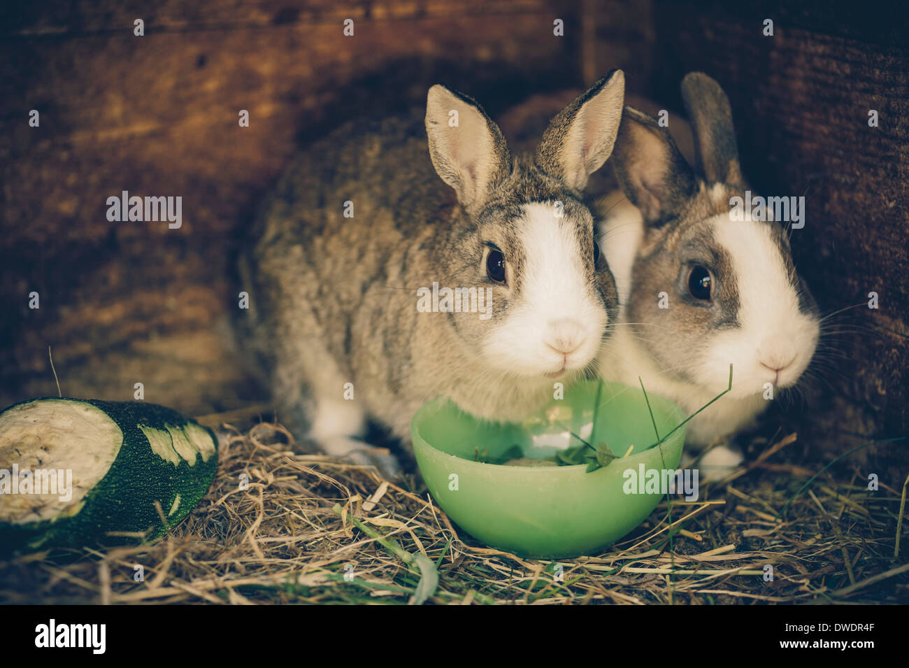 Two rabbits in stable - Stock Image