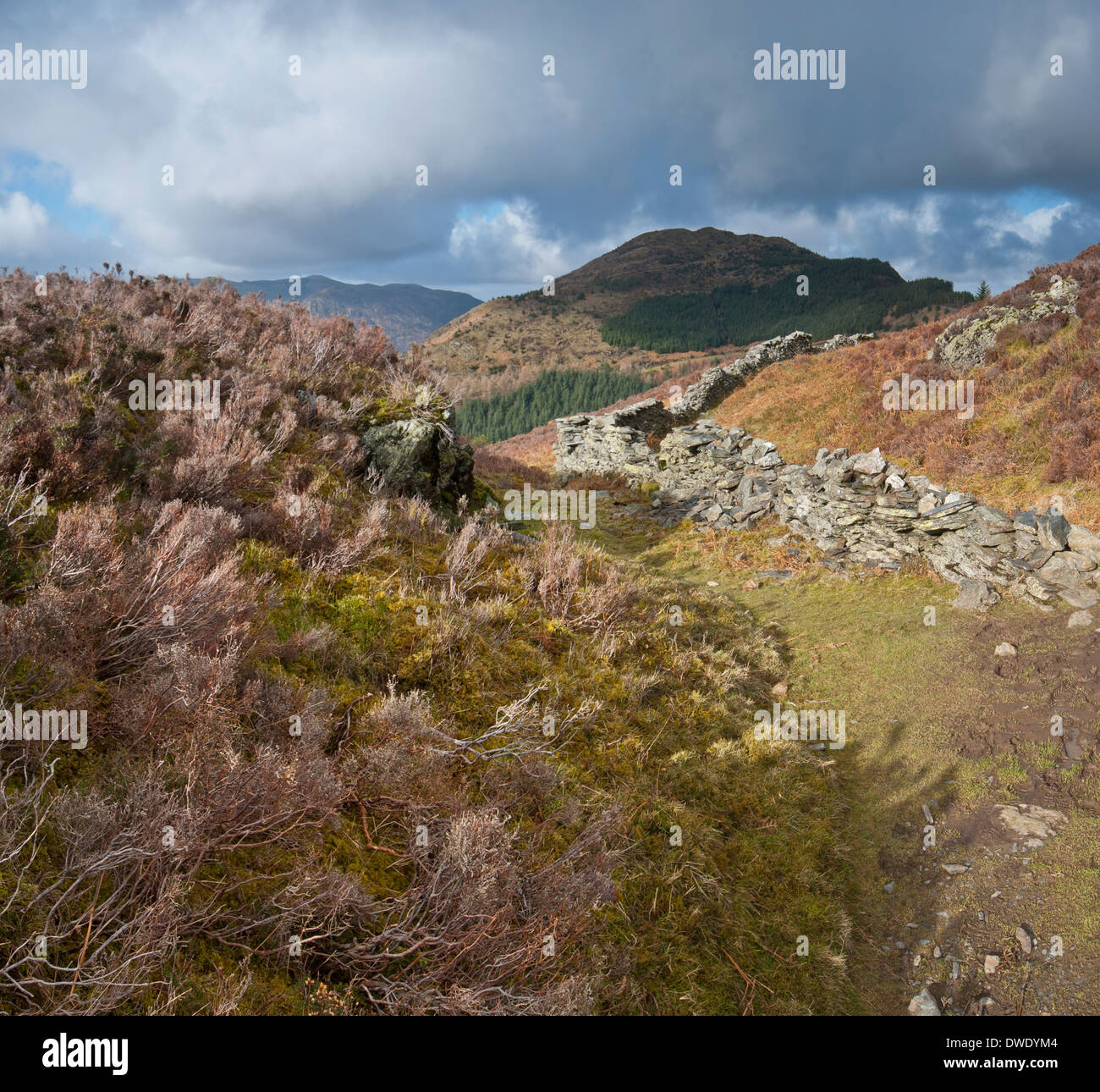 Lake District fells in late winter, early spring with Dodd in the centre. - Stock Image