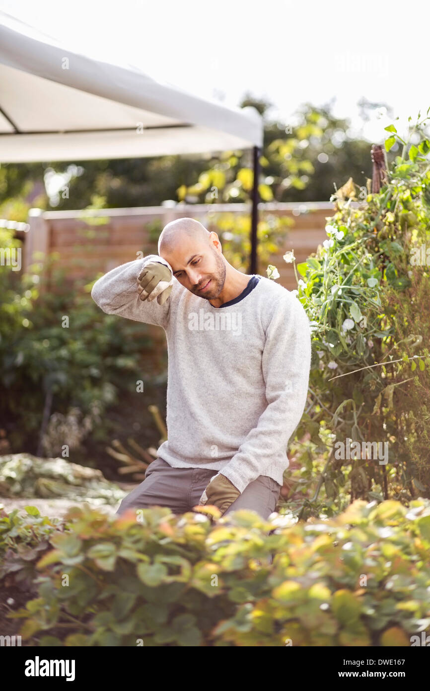 Man wiping sweat form forehead while gardening at yard - Stock Image