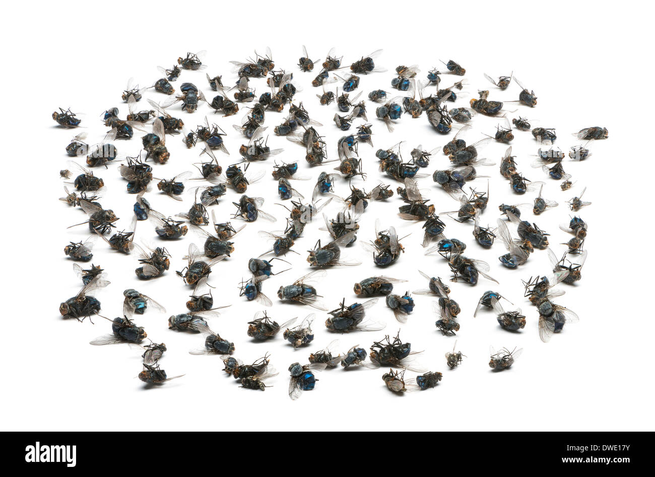 Group of dead flies in front of white background - Stock Image
