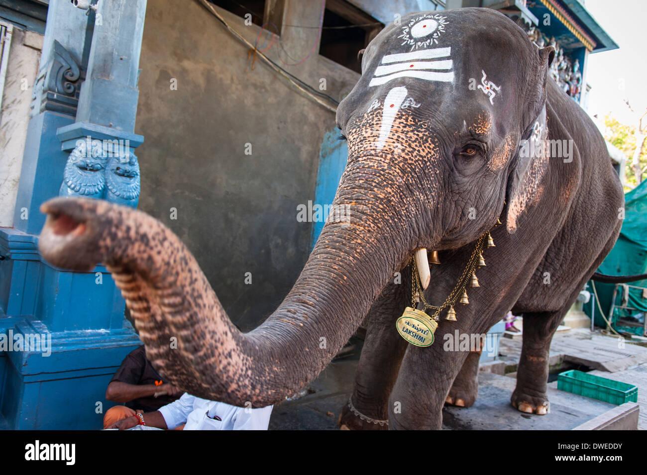 India Tamil Nadu Pondicherry Puducherry Manakula Vinayakar Temple Ganesh Ganesha Lakshmi The Elephant blesses worshipers religious deity head profile - Stock Image