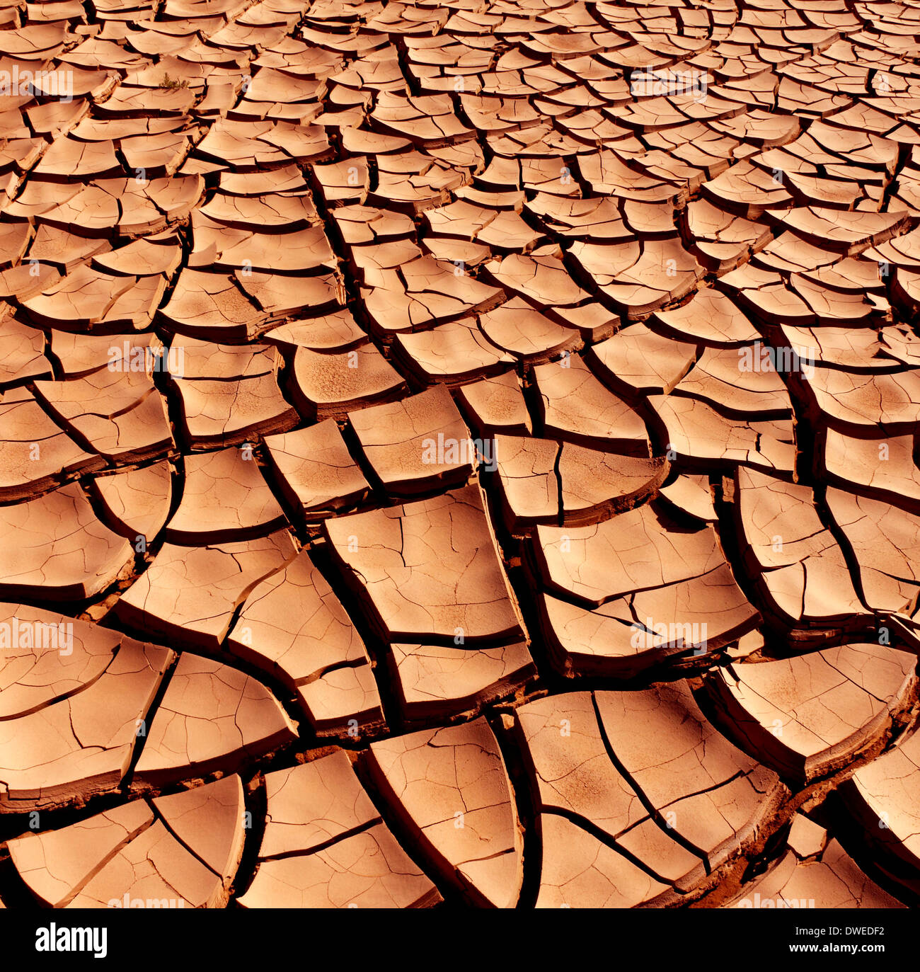 Dry and cracked earth - Stock Image