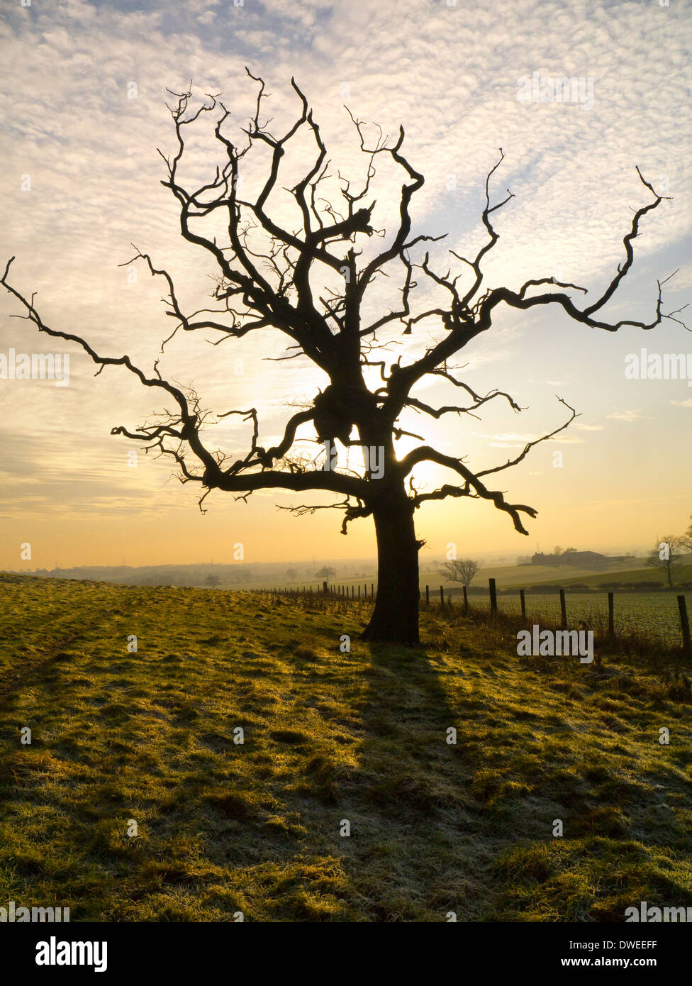 A leafless tree in rolling farmland in winter - Stock Image