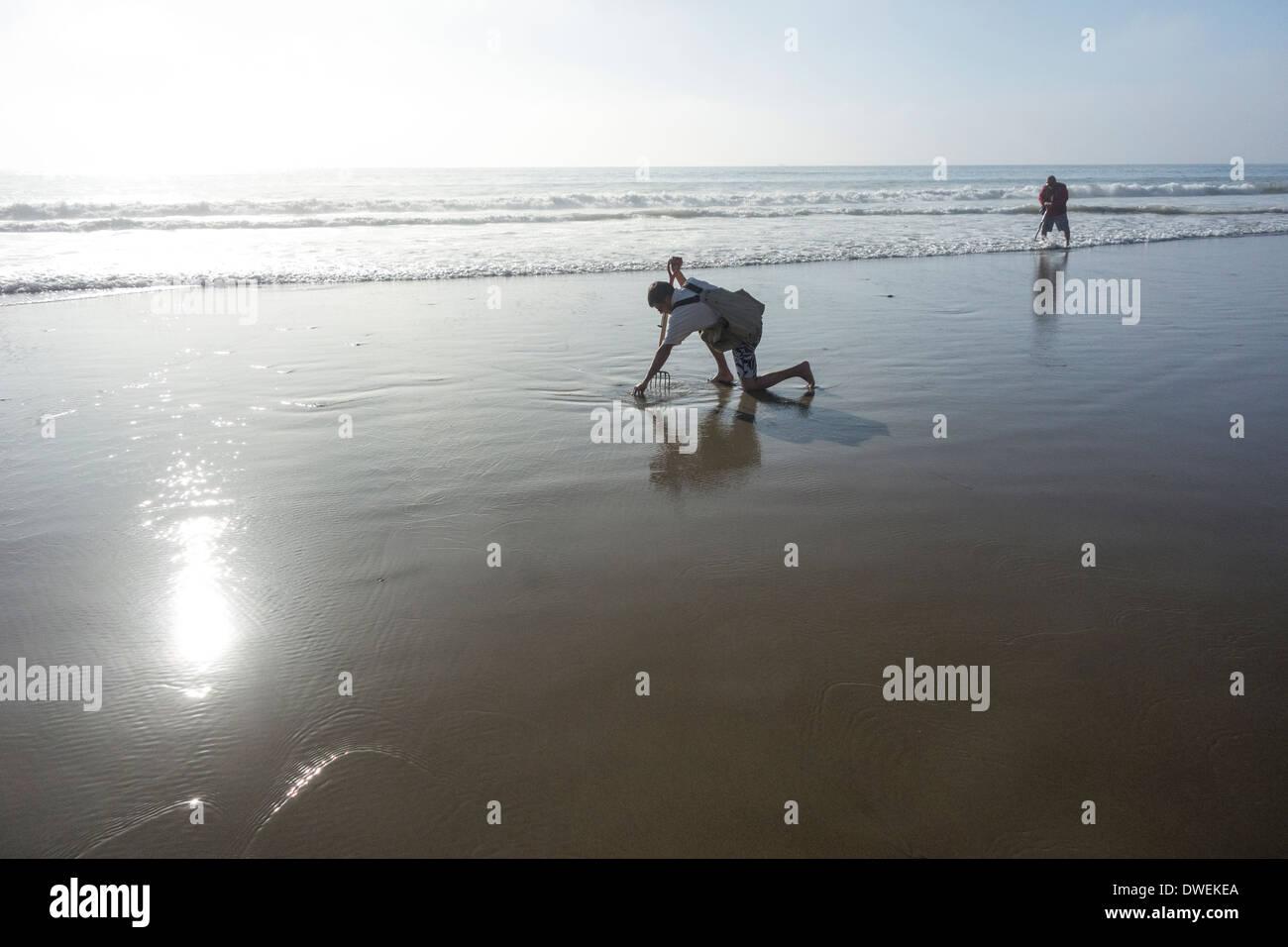 Clam diggers dig for clams on Rincon Beach; Carpinteria; Santa Barbara County; California; USA - Stock Image