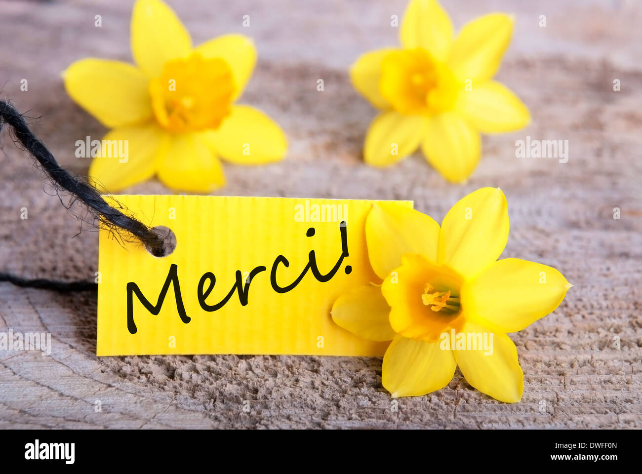 Label with the french word merci which means thanks yellow stock label with the french word merci which means thanks yellow background mightylinksfo