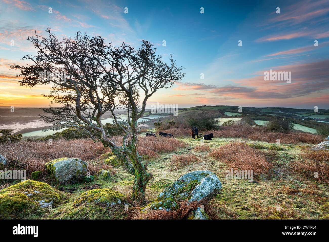 A frosty March sunrise at Helman Tor a craggy outcrop of rugged moorland near Bodmin in Cornwall, an HDR image - Stock Image