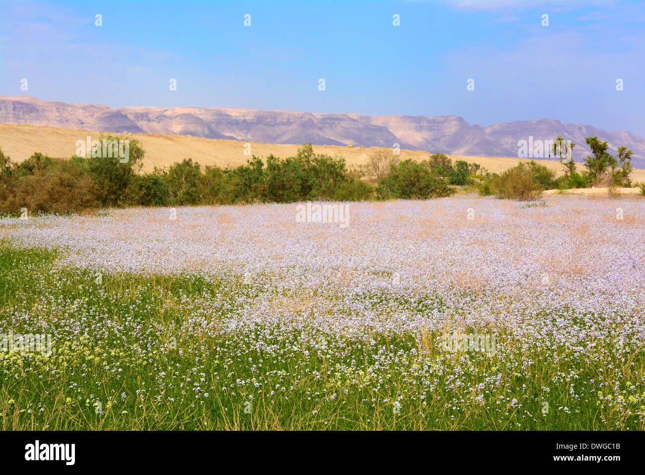 Spring  time near the Dead sea, Israel Stock Photo