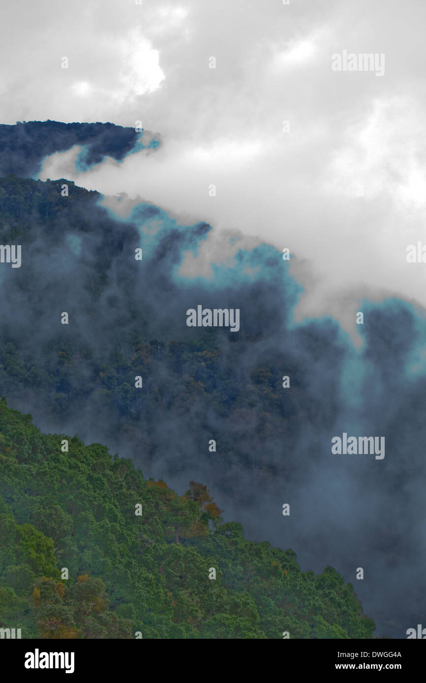 Primary Cloud Forest. Parques Nacional Chirripo. Cerro Chirripo 3800m. Limon. Southwest. Costa Rica. Central America. - Stock Image