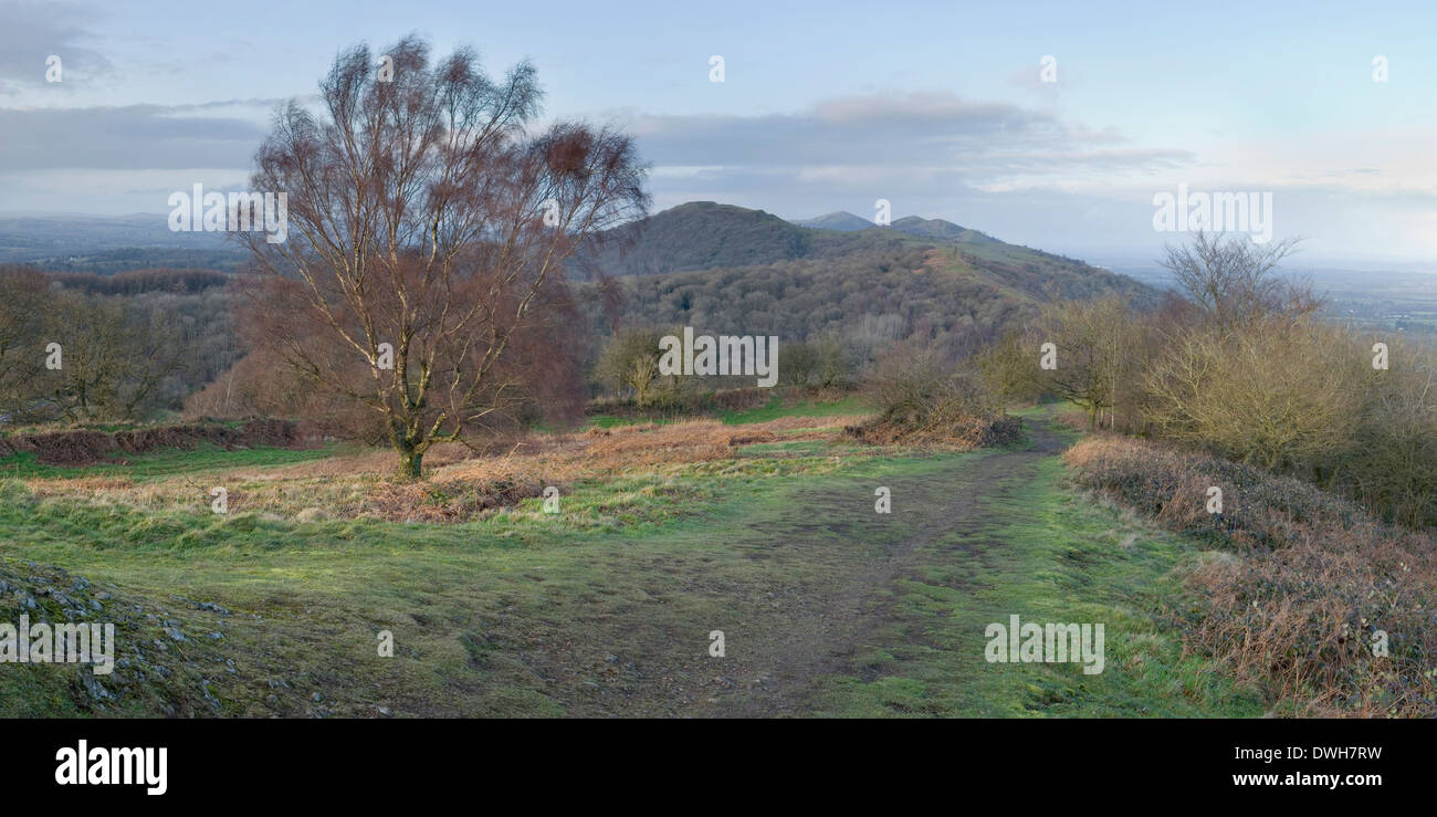 A path is worn through the grass in the wet winter on Midsummer Hill. The Malvern Hills can be seen in the background. Stock Photo