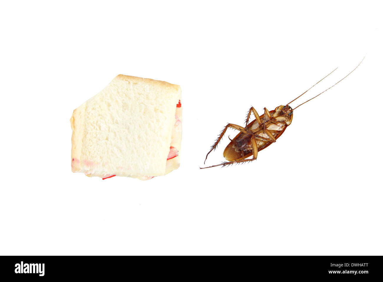 Eating Cockroach Stock Photos & Eating Cockroach Stock Images - Alamy