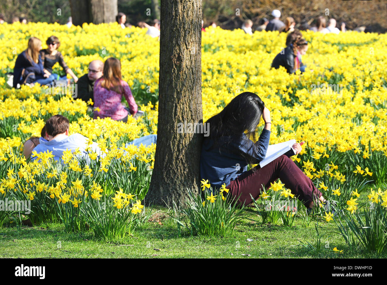Warm Weather People Enjoying The Warm Weather And Spring Daffodils In St James Park,  London, England. The Beautiful Weather Brought Londoners And Tourists Out  To The ...