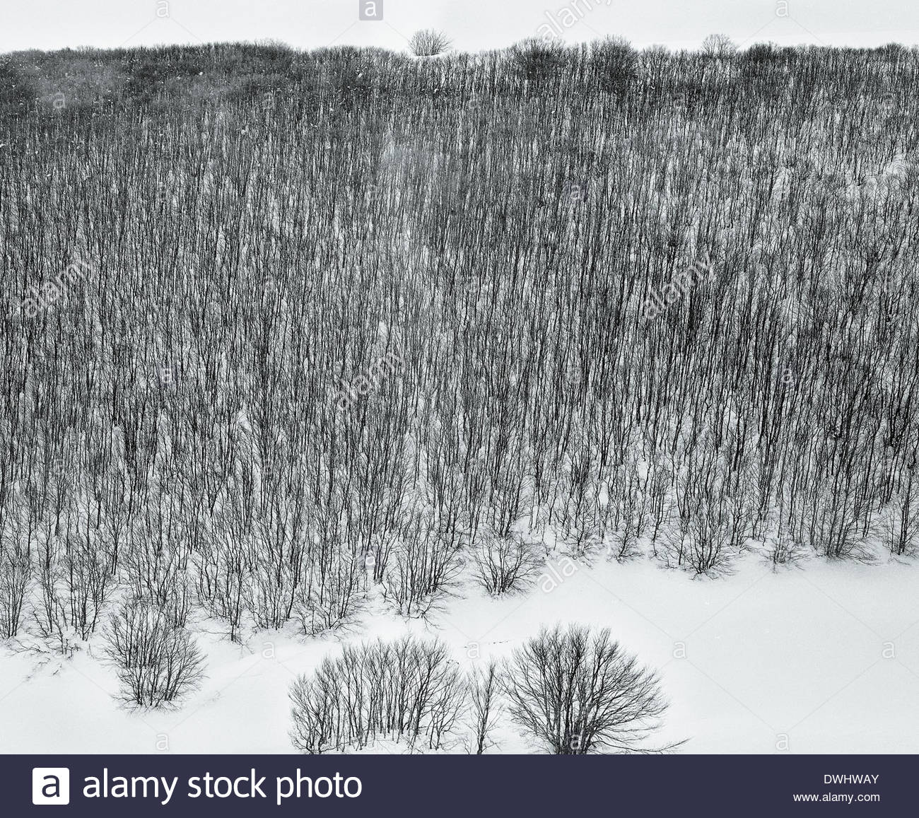 A frozen forest in the Le Marche region of Italy. - Stock Image