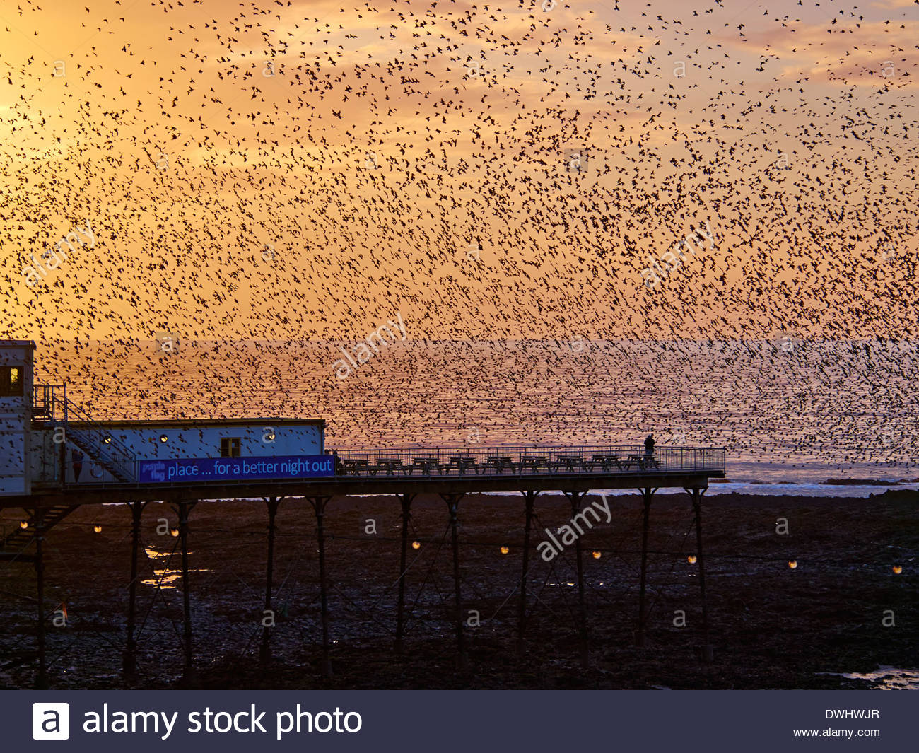 A murmuration of 10s of thousands of starlings roosting over aberystwyth royal pier in march 2014 - Stock Image