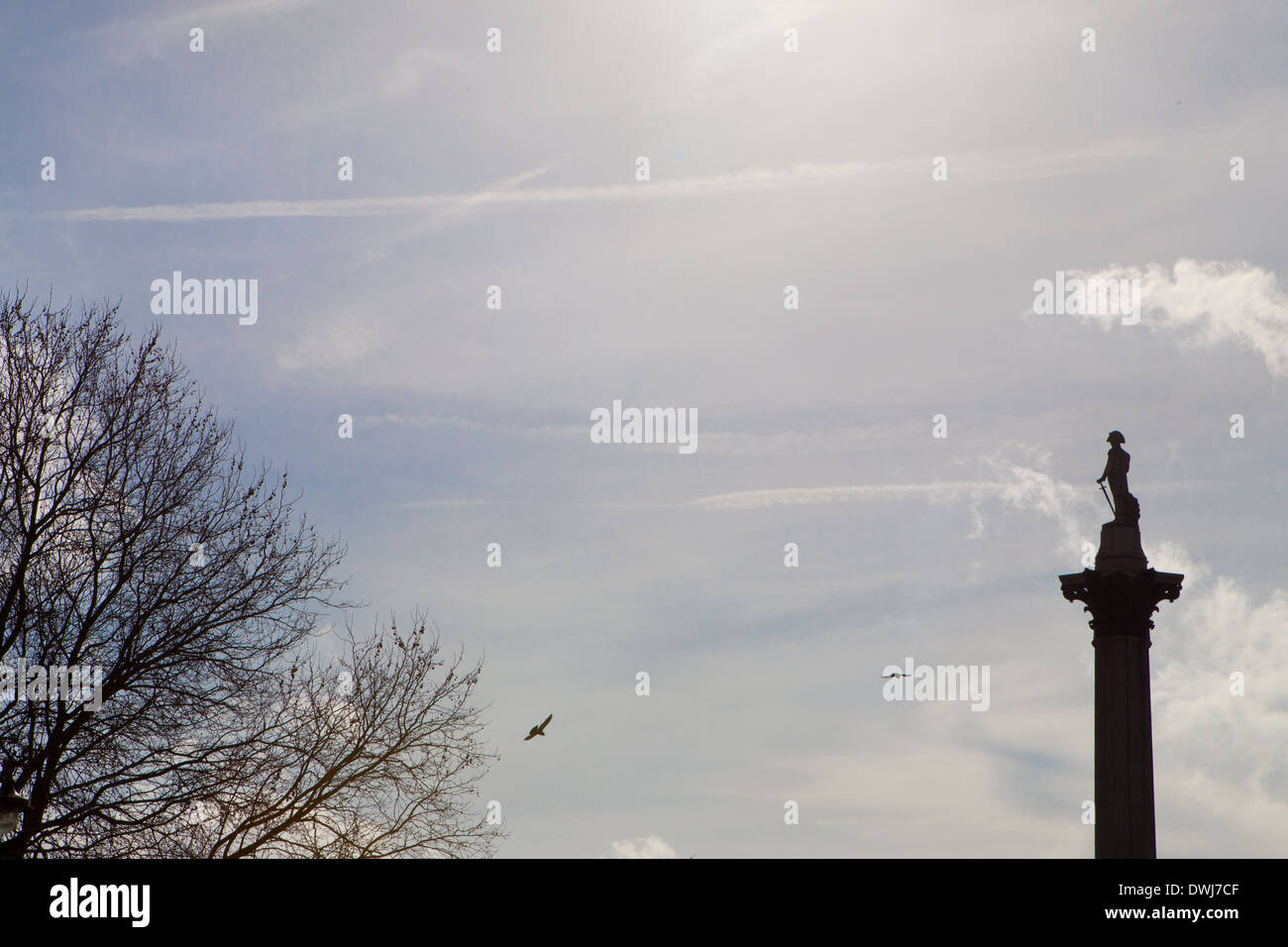 a Skyline of Nelsons Column with 2 pigeons in flight. Stock Photo