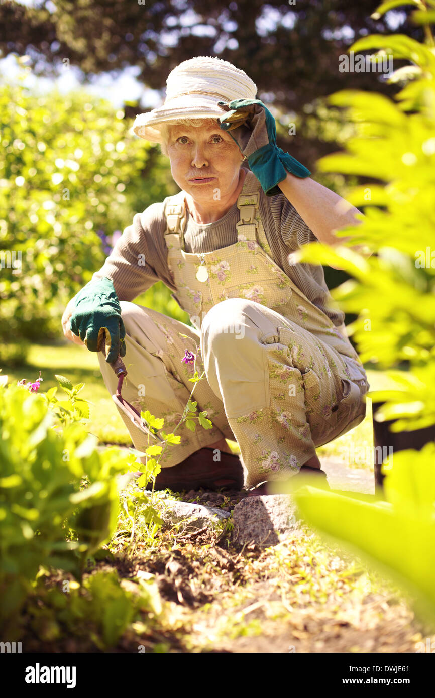 Older woman working in garden feeling tired. Senior woman stopping for a rest while gardening in backyard - Stock Image