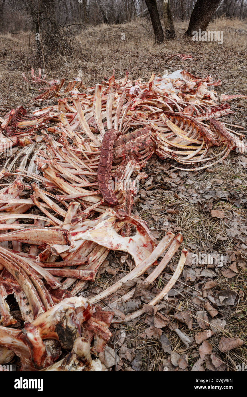 Dump bones in the forest - Stock Image
