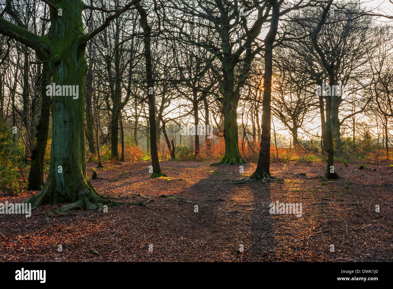 Woods on a public footpath near Holmfirth in the late afternoon sun, Holme Valley, West Yorkshire, England, UK - Stock Image
