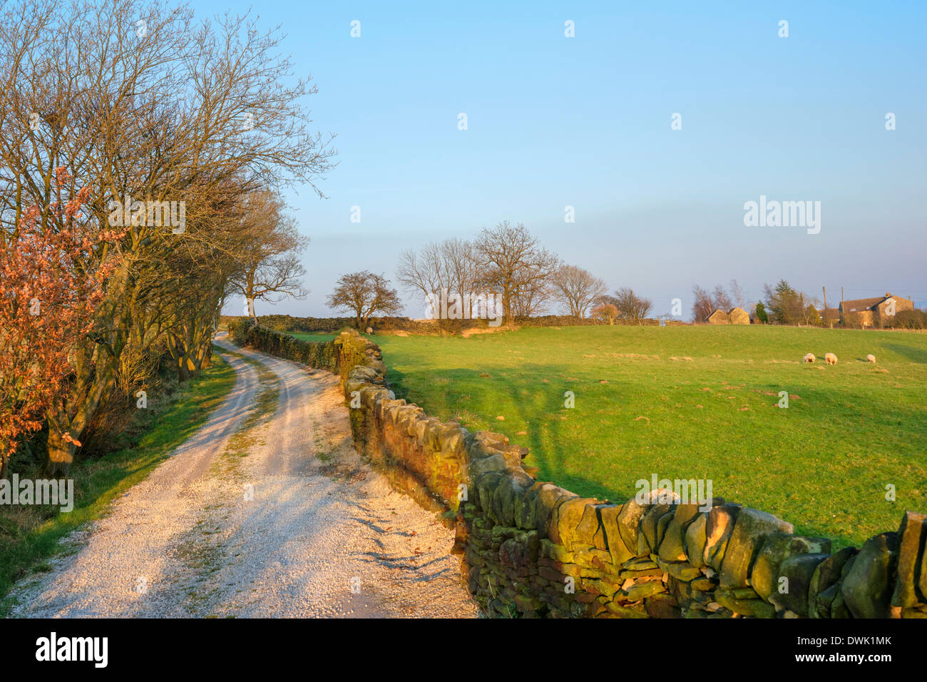 Farm lane near Holmfirth in the late afternoon sun, Holme Valley, West Yorkshire, England, UK Stock Photo