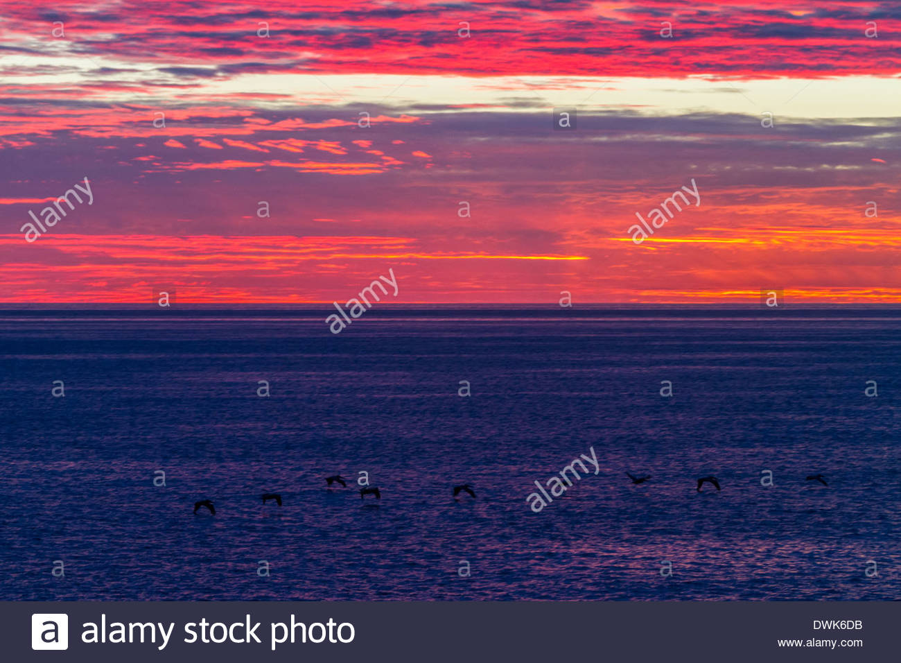 View of seabirds flying above sea - Mexico - Stock Image