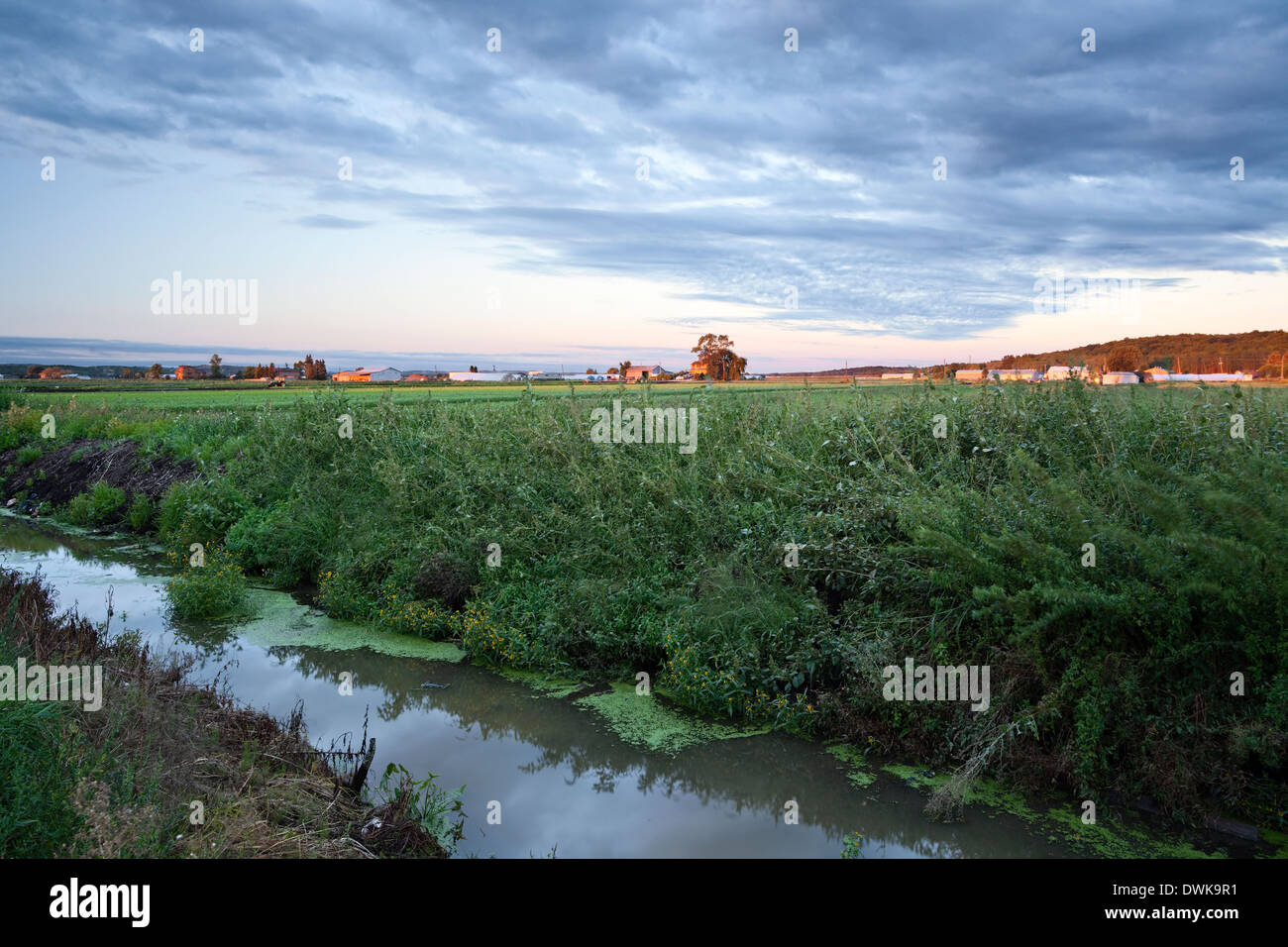 A dirty irrigation canal runs along the side of a road at sunrise in the Holland Marsh, Bradford West Gwillimbury Ontario Canada - Stock Image