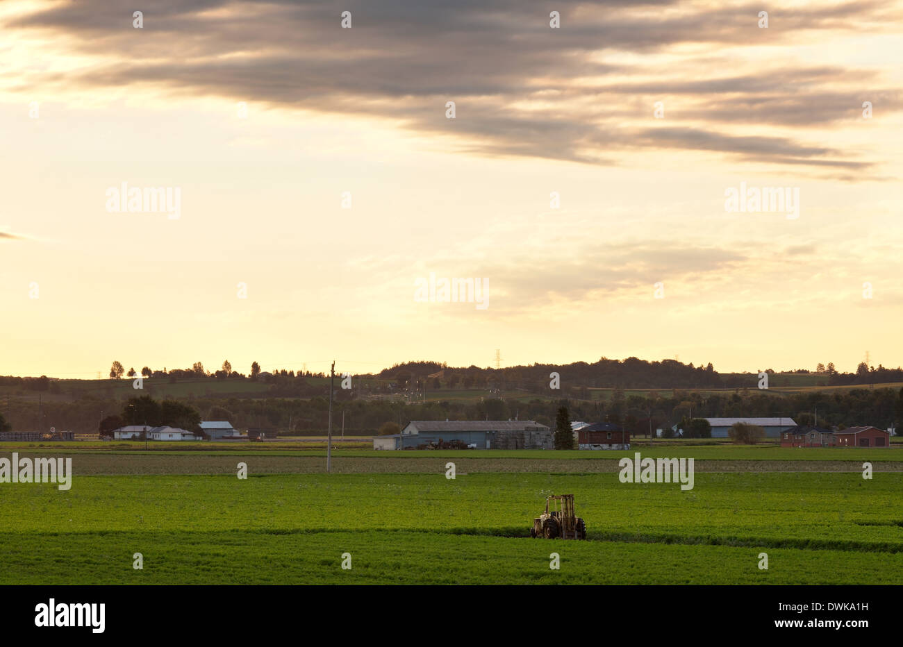 A forklift sits in a field of carrots in the Holland Marsh agricultural area, Bradford West Gwillimbury, Ontario, Canada. - Stock Image
