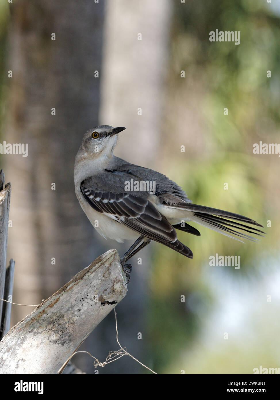 Florida State Bird Stock Photos & Florida State Bird Stock