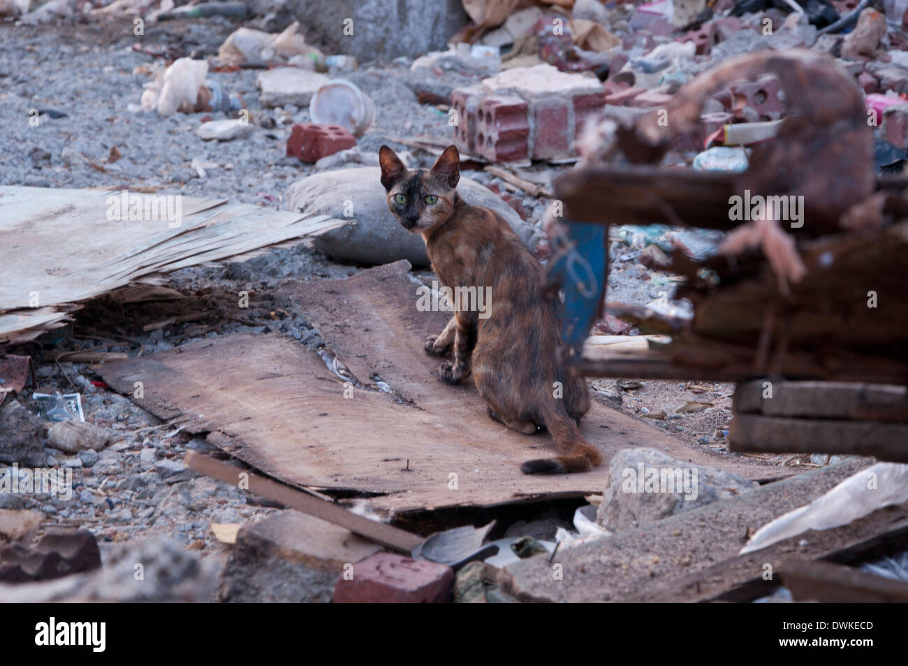 Cat in the rubble and mess in Egypt, hurghada - Stock Image