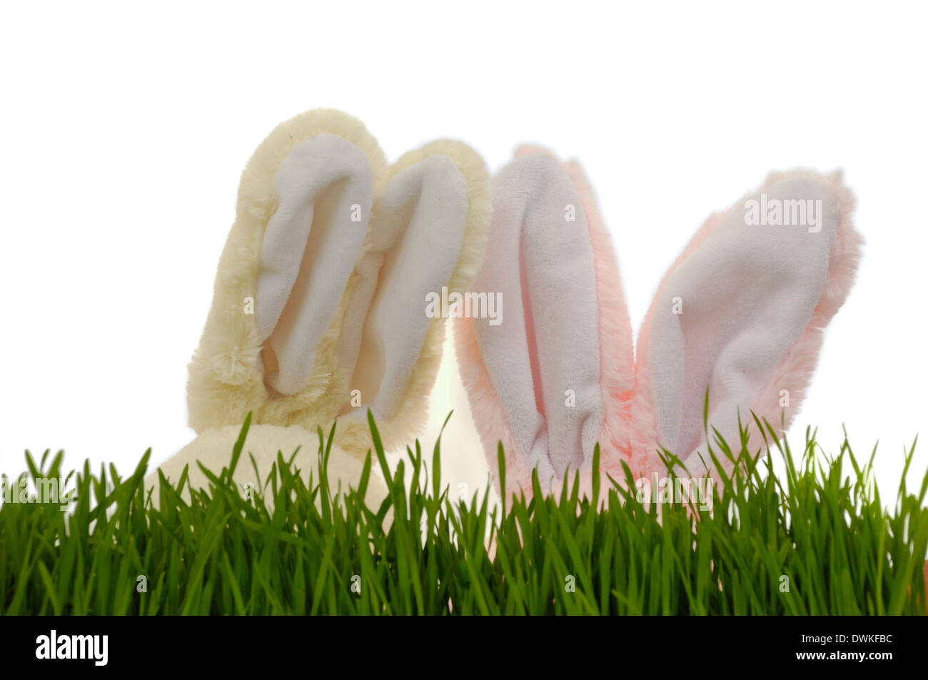Two easter bunnies is playing hide and seek. Fucus on the ears - Stock Image