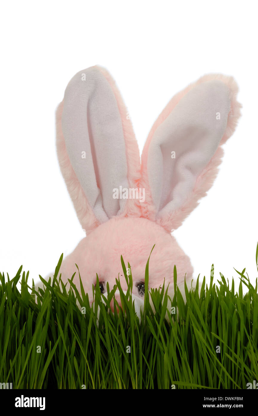 Easter bunny is playing hide and seek in green grass. With a clean white background. - Stock Image