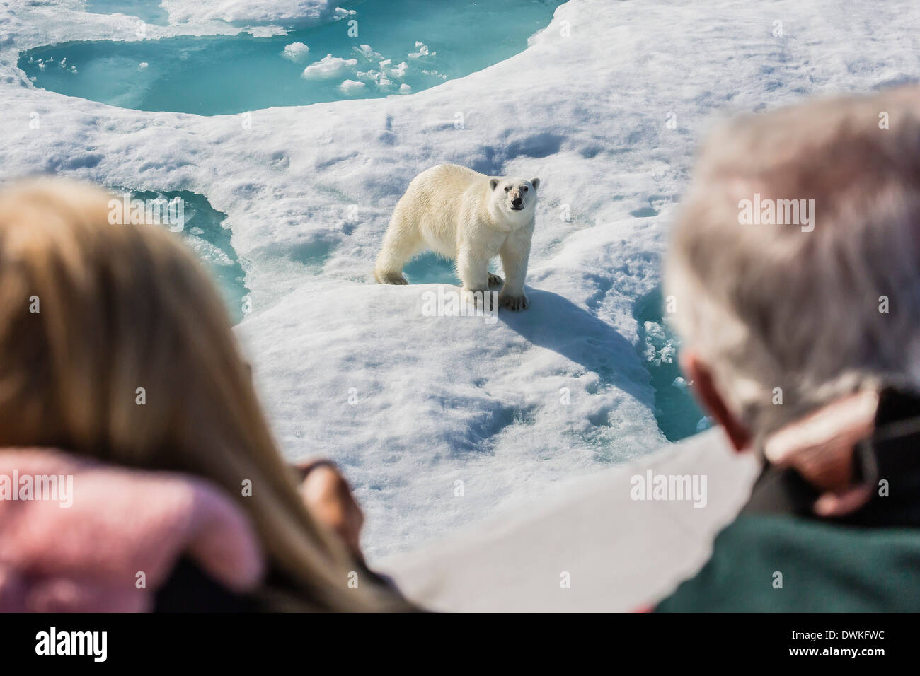 Guests from the Lindblad Expedition ship with polar bear (Ursus maritimus), Cumberland Peninsula, Baffin Island, Stock Photo
