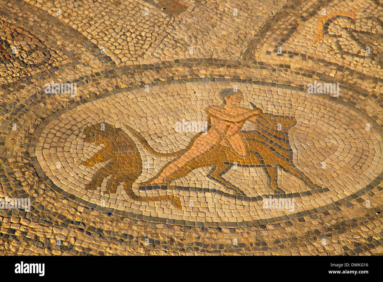 Excavated Roman City, Volubilis, UNESCO World Heritage Site, Morocco, North Africa, Africa Stock Photo