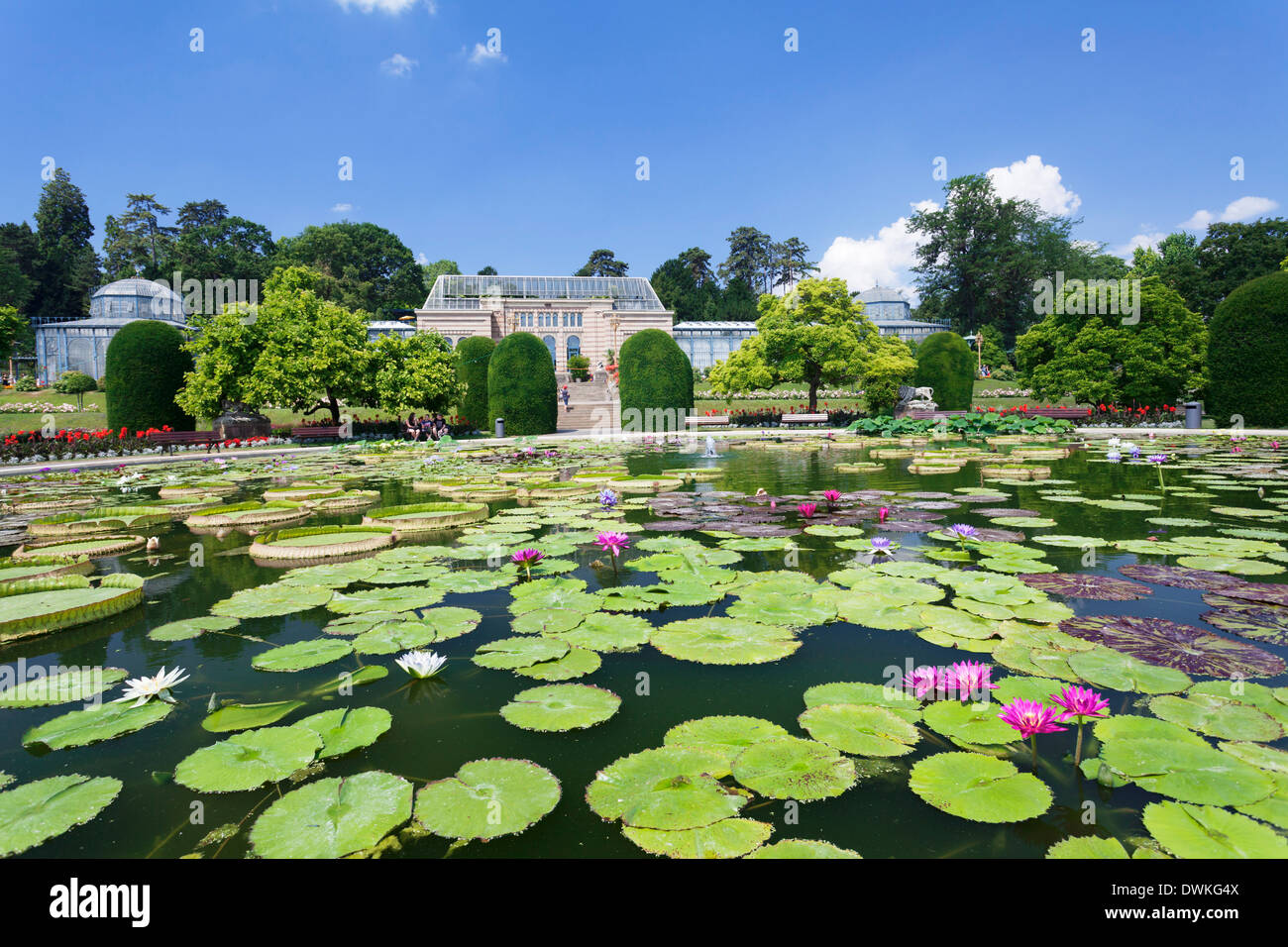 moorish garden with water lilies genus nymphaea wilhelma zoo and stock photo 67427274 alamy. Black Bedroom Furniture Sets. Home Design Ideas