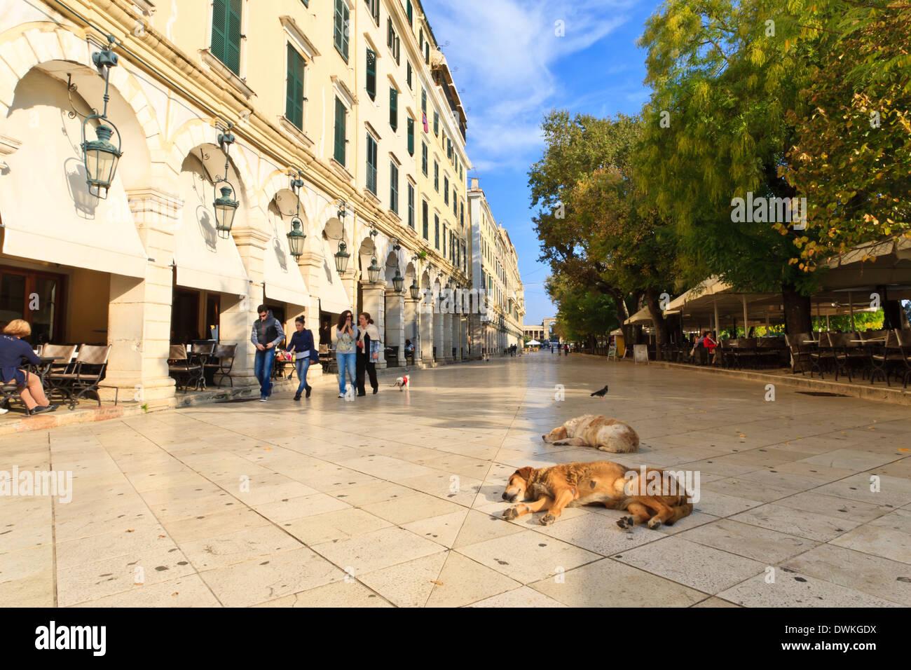 Residents and sleeping dogs, The Liston, Corfu Town, Corfu, Ionian Islands, Greek Islands, Greece, Europe Stock Photo