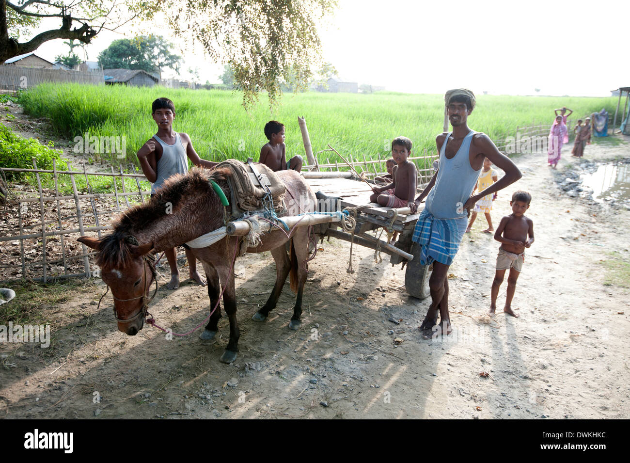 Children and men round donkey cart beside village rice paddy, Bogerpar district, Assam, India, Asia - Stock Image