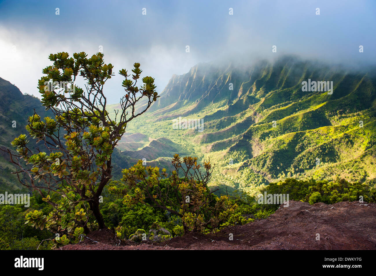 Kalalau lookout over the Napali coast from the Kokee State Park, Kauai, Hawaii, United States of America, Pacific - Stock Image