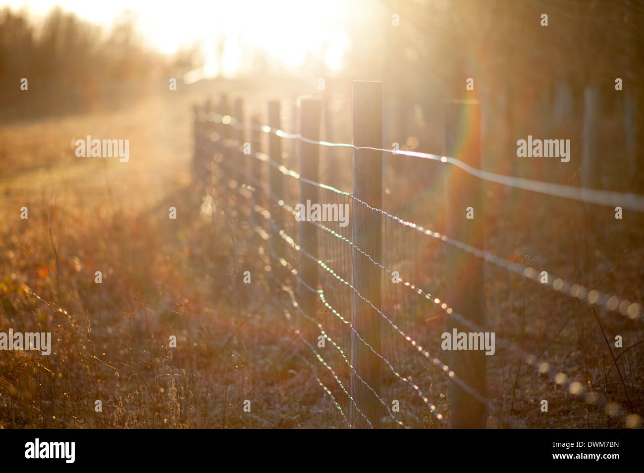 Lens flare looking directly into the sun along a fence in Wandlebury country park, Cambridge countryside - Stock Image