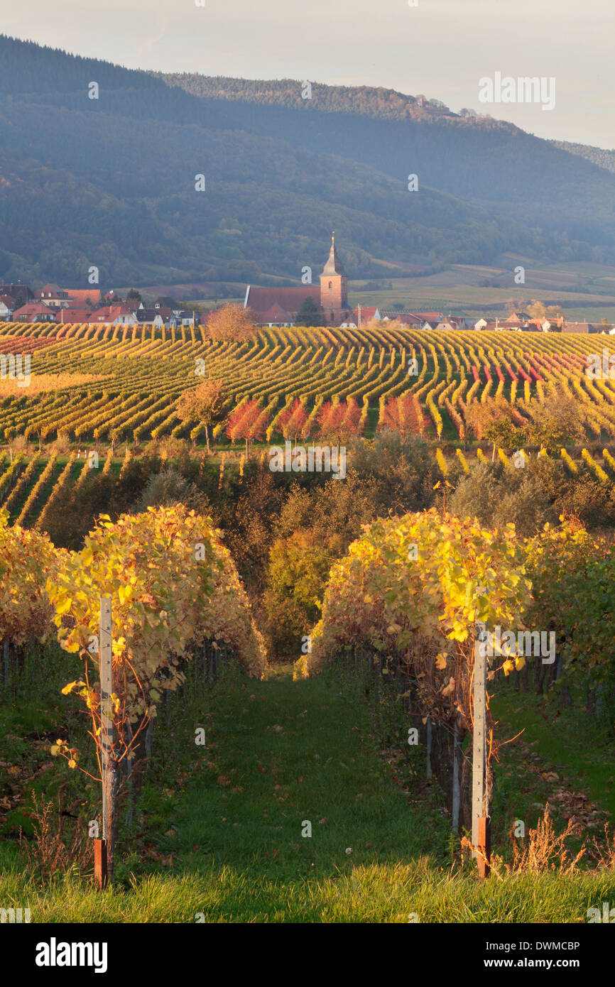 View over vineyards to the wine village of Burrweiler in autumn, German Wine Route, Pfalz, Rhineland-Palatinate, Stock Photo