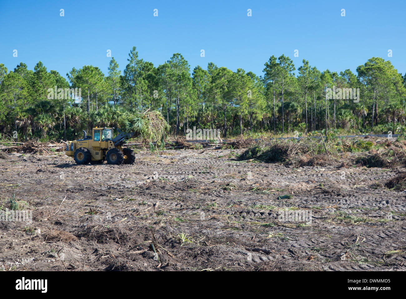 Everglades Restoration Stock Photo