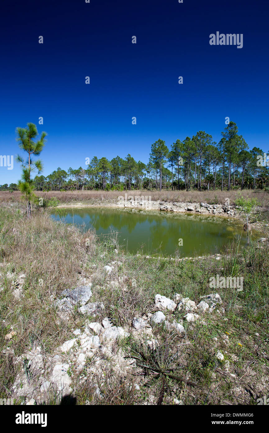 Everglades Restoration Stock Photo